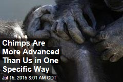 Chimps Are More Advanced Than Us In One Specific Way