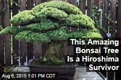 An Amazing Bonsai Tree, Other Hiroshima Tales