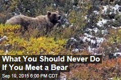 What You Should Never Do If You Meet a Bear