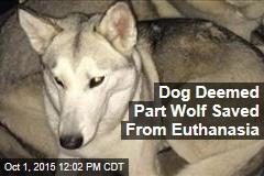 Dog Deemed Part Wolf Saved From Euthanasia