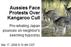 Aussies Face Protests Over Kangaroo Cull