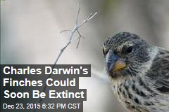 Charles Darwin's Finches Could Soon Be Extinct