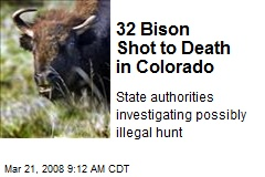 32 Bison Shot to Death in Colorado