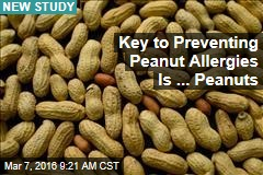 Key to Preventing Peanut Allergies Is ... Peanuts