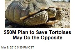 $50M Plan to Save Tortoises May Do the Opposite