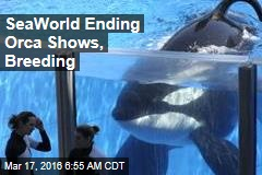 SeaWorld Ending Orca Shows, Breeding
