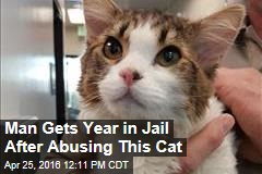 Man Gets Year in Jail for Abusing This Cat