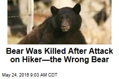Bear Was Killed After Attack on Hiker—the Wrong Bear