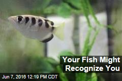 Your Fish Might Recognize You