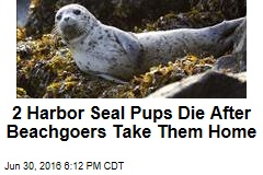 2 Harbor Seal Pups Die After Beachgoers Take Them Home
