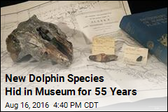 New Dolphin Species Discovered—In a Museum
