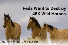 Feds Want to Destroy 45K Wild Horses