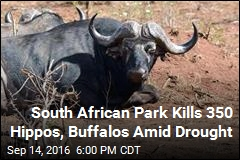 South African Park Kills 350 Hippos, Buffalos Amid Drought