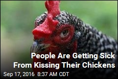Stop Kissing Your Chickens, CDC Warns