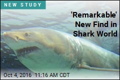 Scientists ID New Prehistoric Shark Species