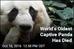 World's Oldest Captive Panda Has Died