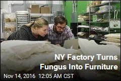 NY Factory Turns Fungus Into Furniture