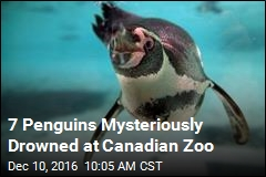 7 Penguins Mysteriously Drowned at Canadian Zoo