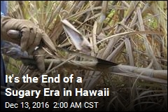 Hawaii Brings in Final Sugar Harvest