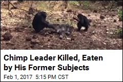 Chimp Leader Killed, Eaten by His Former Subjects