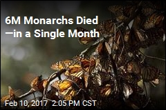 6M Monarchs Died —in a Single Month
