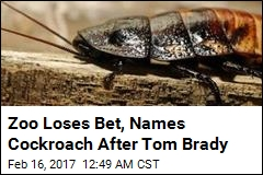 Zoo Loses Bet, Names Cockroach After Tom Brady