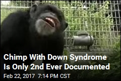 Chimp With Down Syndrome Is Only 2nd Ever Documented