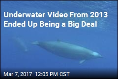 Underwater Video From 2013 Ended Up Being a Big Deal