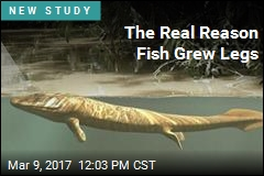 The Real Reason Fish Grew Legs