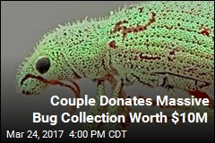 Couple Donates Massive Bug Collection Worth $10M