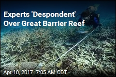 Only a Third of Great Barrier Reef Now Undamaged