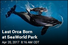 Last Orca Born at SeaWorld Park