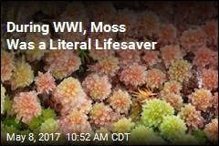 During WWI, Moss Was a Literal Lifesaver