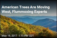 American Trees Are Moving West, Flummoxing Experts