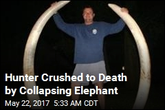 Hunter Crushed to Death by Elephant