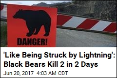Just 6 Fatal Bear Maulings Since 1880. Then 2 in 2 Days