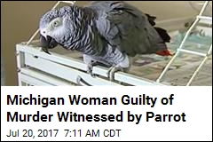 Michigan Woman Guilty of Murder Witnessed by Parrot