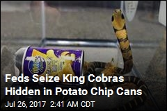Feds Say Man Smuggled King Cobras in Potato Chip Cans
