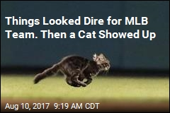 Baseball's New Hero: 'Rally Cat'
