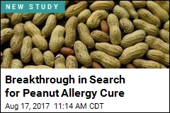 Breakthrough in Search for Peanut Allergy Cure