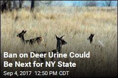 Biologists Want to Ban Deer Urine Lures in NY State