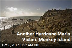 Another Hurricane Maria Victim: Monkey Island
