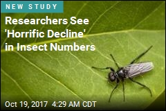 Researchers See 'Horrific Decline' in Insect Numbers
