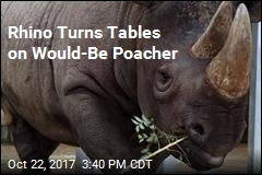 Rhino Turns Tables on Would-Be Poacher