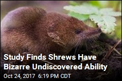 Study Finds Shrews Have Bizarre Undiscovered Ability