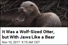 It Was a Wolf-Sized Otter, but With Jaws Like a Bear