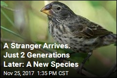 A Stranger Arrives. Just 2 Generations Later: A New Species