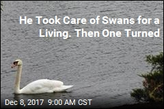 Woman Sues After Swan Attack Led to Husband's Death