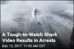 3 Face Felony Charges Over Brutal Shark Video