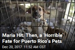 Puerto Rico's Furriest Residents Abandoned After Hurricane